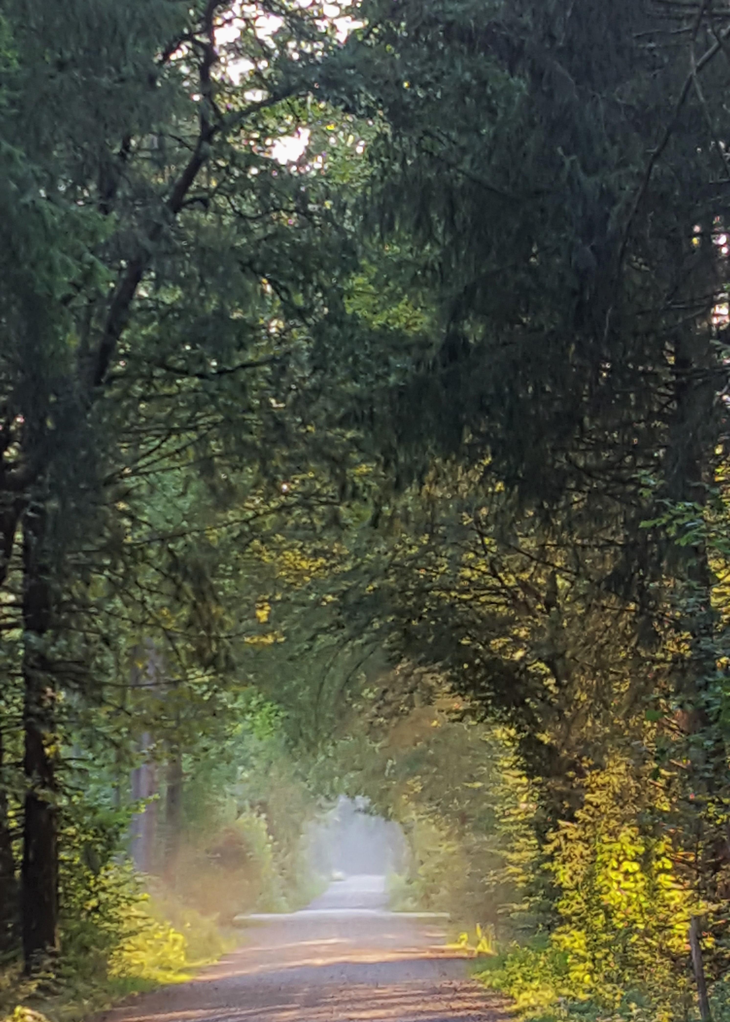 Stimmung Licht Wald